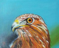#17 Proud Eagle 11x14 inch acrylic on canvas panel Original SOLD $95.00